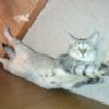 【どうぶつの話題】ネコ「そろそろ干支の再編成を行うべき」 好きな動物ランキング
