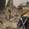 【ネコの話題】ネコにバカにされてる?トイレはどうしてる?サイレントニャーって?