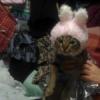 【猫バカ】2月22日は「にゃんにゃんにゃん」で猫の日だぞい「CIAOちゅ〜る」のMVかわ