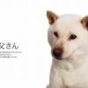 【ハズキルーペ、だぁいすき】菊川怜のハズキルーペ演出、ソフトバンクCMでまさかの「
