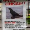 【どうぶつの話題】駅で切符を買う「賢すぎる券売機カラス」が再登場 錦糸町から東村