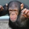 【大分の闇】チンパンジーっていうな!別府大分毎日マラソン通訳の女性がア